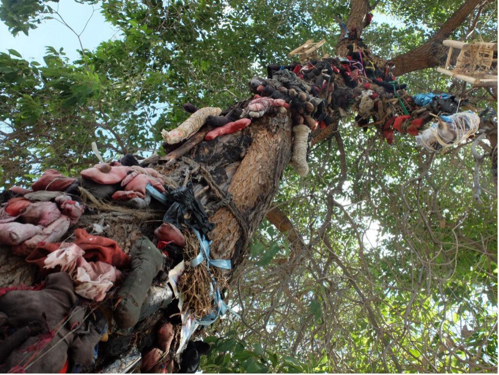 Baum in Haiti, der von diversen Geistern bewohnt wird und daher tabu fürs Fällen ist. © Fastenopfer, Simon Degelo