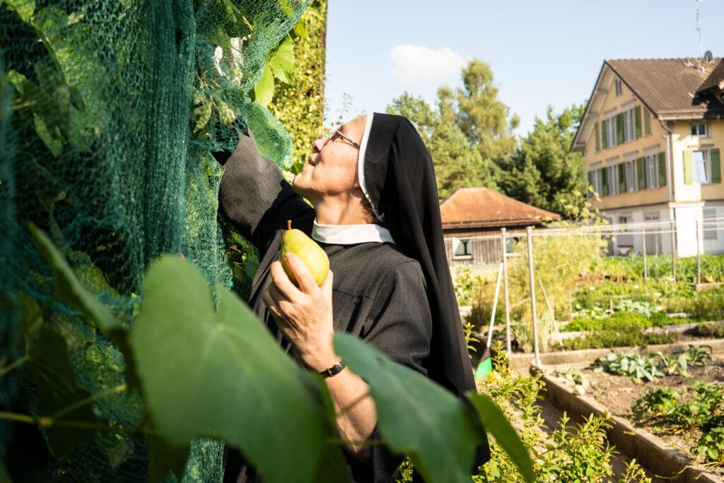 In Schweizer Klöstern spiegelt sich die ganzheitliche Beziehung zur Natur. Im Bild: Birnenernte im Kloster Maria der Engel in Appenzell. © Vera Rüttimann