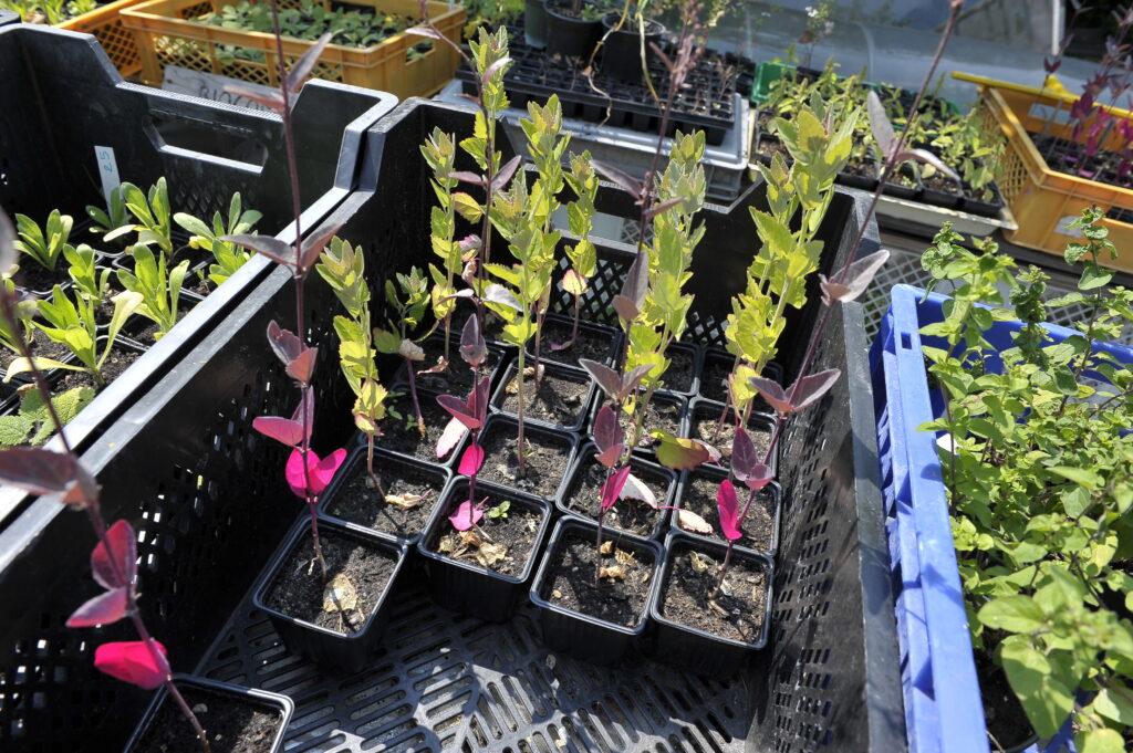 Setzlinge pflanzen für zukünftige Generationen. © Vera Rüttimann